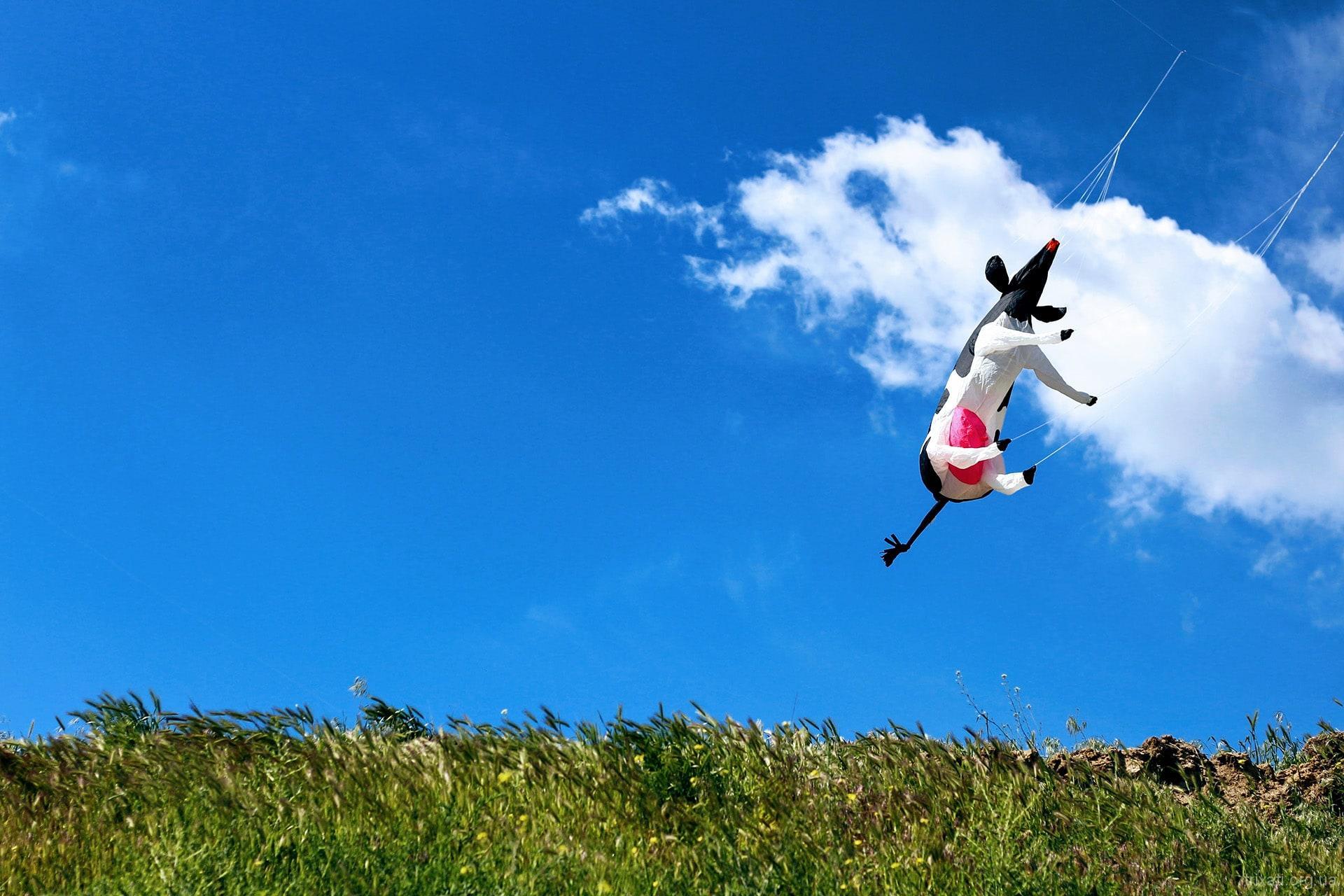 Tryhutty International Kite Festival 2017